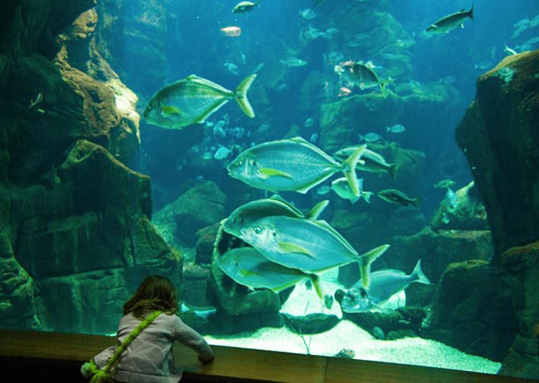 Aquário da Madeira